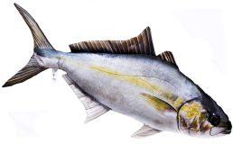 Fisch Stofftiere Amberjack