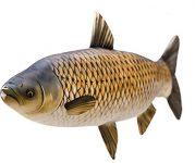 Fisch Stofftiere Graskarpfen