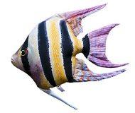 Fisch Stofftiere Kaiserfisch
