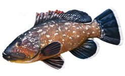 Fisch Stofftiere Zwergbarsch